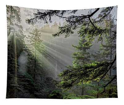Morning Rays Through An Oregon Rain Forest Tapestry