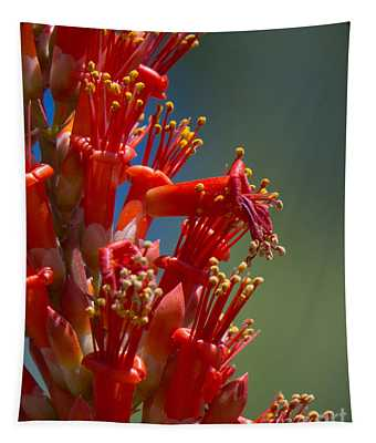 Red Cactus Flower 1 Tapestry