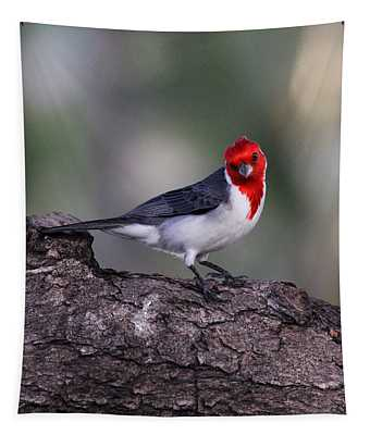 Red Crested Posing Tapestry