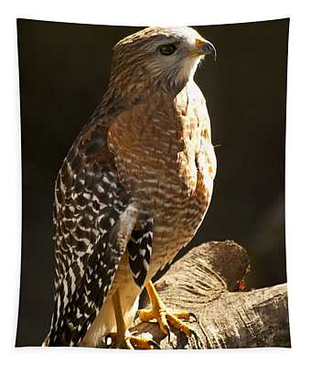 Red-shouldered Hawk Tapestry