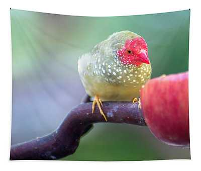 Red Star Finch Tapestry
