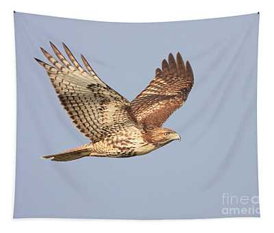 Red Tailed Hawk 20100101-1 Tapestry