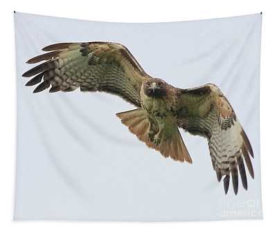 Red Tailed Hawk Finds Its Prey Tapestry