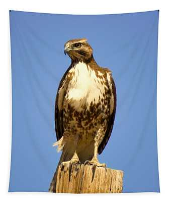 Red-tailed Hawk On Post Tapestry