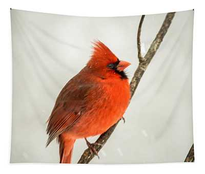 Redbird In A Cold Snow Tapestry