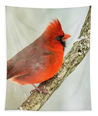Redbird In Snow Tapestry