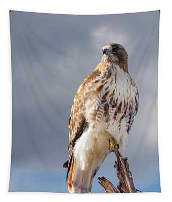 Redtail Portrait Tapestry