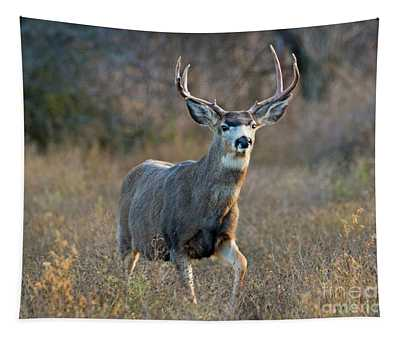 Regal Buck Tapestry