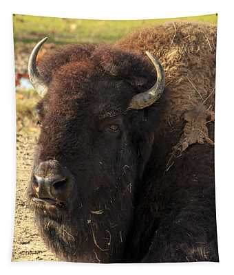 Resting Buffalo Tapestry