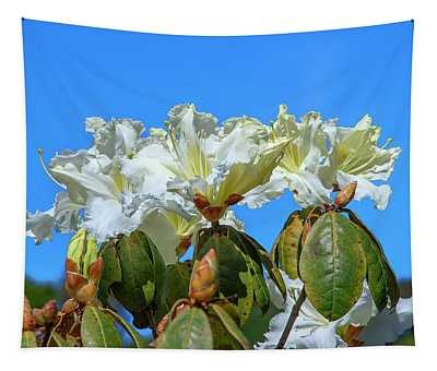 Rhododendron Ciliicalyx Dthn0213 Tapestry