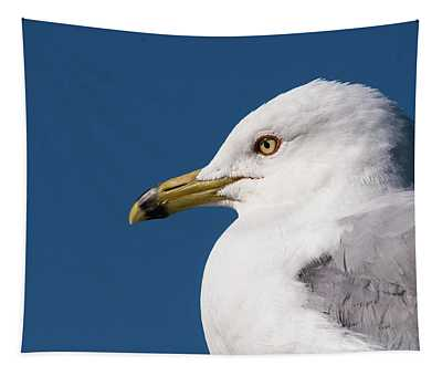 Ring-billed Gull Portrait Tapestry