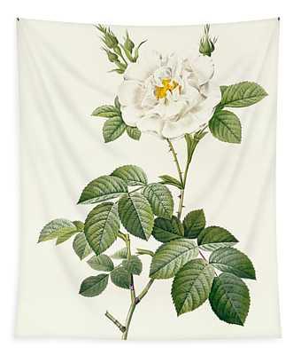 Rosa Alba Flore Pleno Tapestry