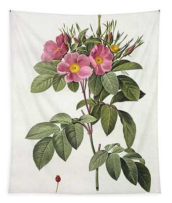 Rosa Carolina Corymbosa Tapestry