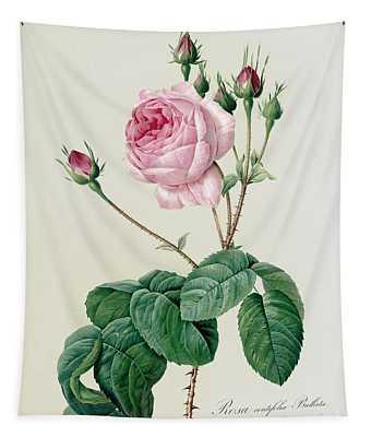 Rosa Centifolia Bullata Tapestry