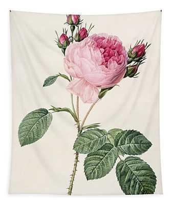 Rosa Centifolia Tapestry