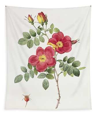 Rosa Eglantera Punicea Tapestry