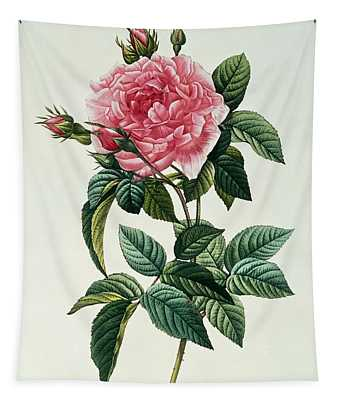Rosa Gallica Regalis Tapestry