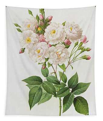 Rosa Noisettiana Tapestry