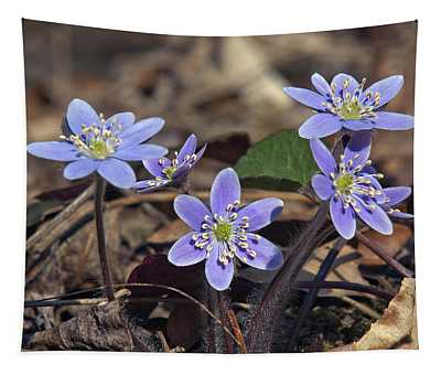 Round-lobed Hepatica Dspf116 Tapestry