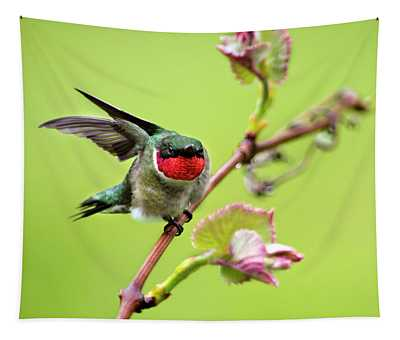 Tapestry featuring the photograph Ruby Garden Hummingbird by Christina Rollo