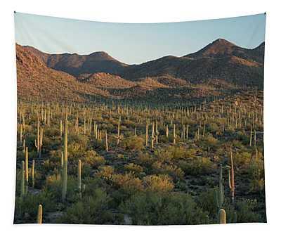 Saguaro National Park At Signal Hill Panoramic Tapestry