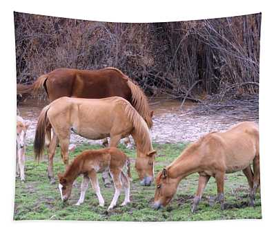 Salt River Wild Horses In Winter Tapestry
