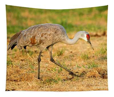 Sandhill Crane Grazing Tapestry