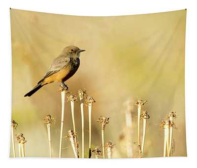 Say's Phoebe Tapestry