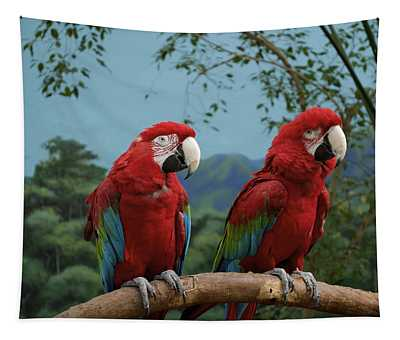 Scarlet Macaws Spring Time Courting Tapestry