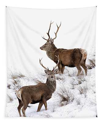 Scottish Red Deer Stags Tapestry