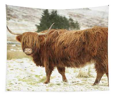 Scottish Red Highland Cow In Winter Tapestry