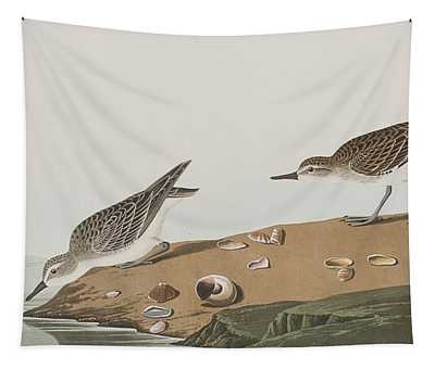 Semipalmated Sandpiper Tapestry