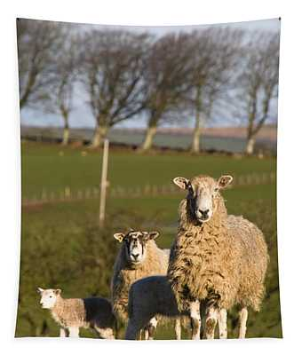 Sheep, Lake District, Cumbria, England Tapestry