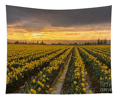 Skagit Valley Daffodils At Dusk Tapestry