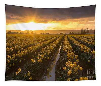 Skagit Valley Daffodils Golden Sunset Light Tapestry