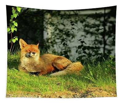 Sleepy Fox Tapestry