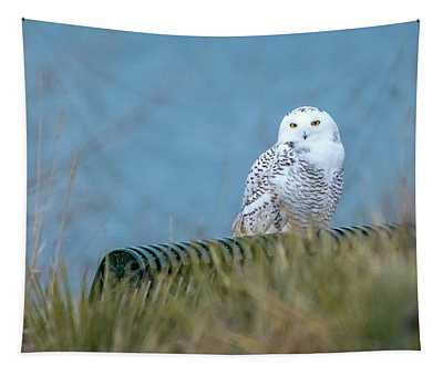 Snowy Owl On A Park Bench Tapestry