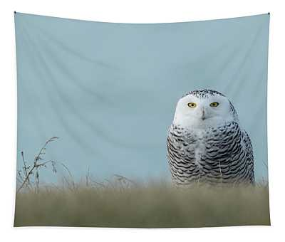 Snowy Owl On Blue Tapestry
