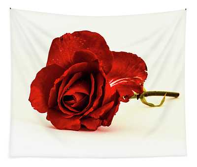 Red Rose Bud Tapestry
