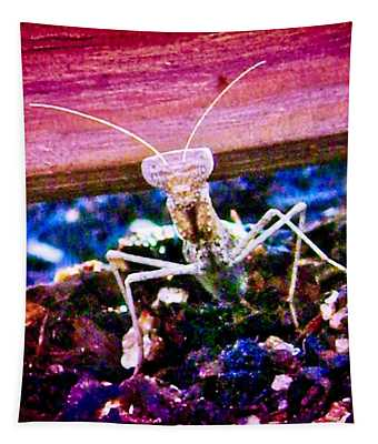 Sonoran Desert Ground Mantis Tapestry