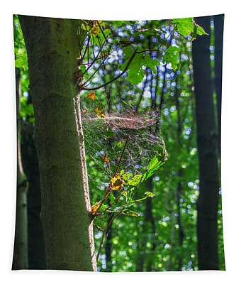 Spider Web In A Forest Tapestry