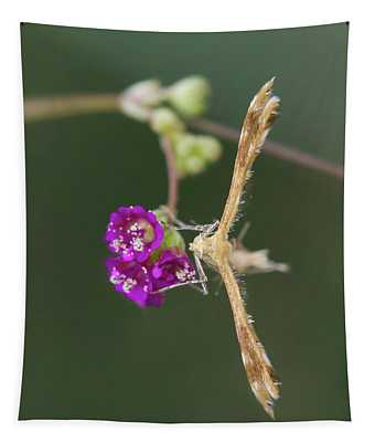 Spiderling Plume Moth On Wineflower Tapestry