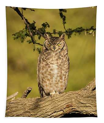 Spotted Eagle-owl  Tapestry