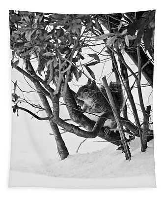 Squirrel In Low Branches Tapestry