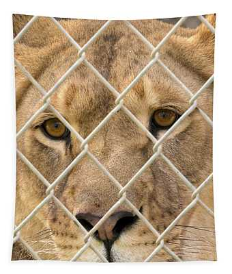 Staring Lioness Tapestry