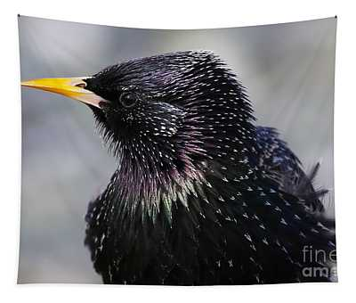 Starling Tapestry