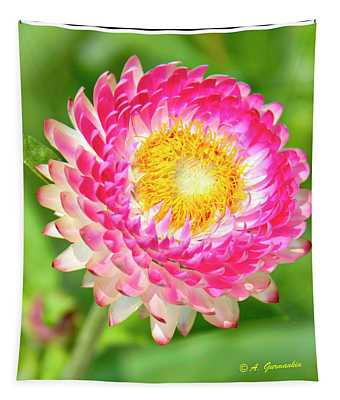 Strawflower Tapestry