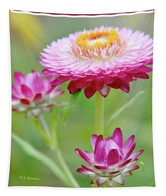 Strawflower Blossoms Tapestry