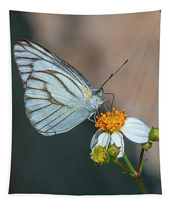 Striped Albatross Butterfly Dthn0209 Tapestry