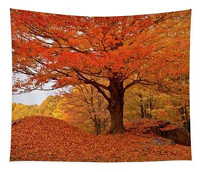 Sturdy Maple In Autumn Orange Tapestry
